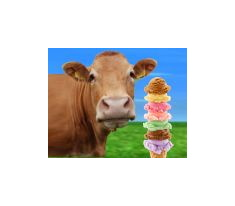 the ice cream cow